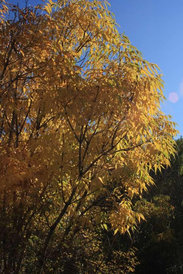 Wildes Herbstcamp  in Brandenburg