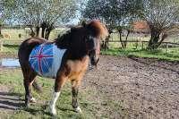 Englisch Camp mit Reiterferien