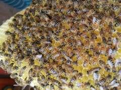 Die Bienenwoche